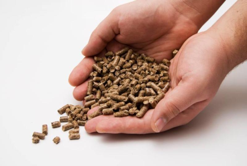 azwood energy wood pellets on someones open hands.